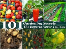 101 Gardening Secrets The Experts Never Tell You - Great Gardening Ideas