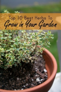 10 best herbs to grow - Gardens