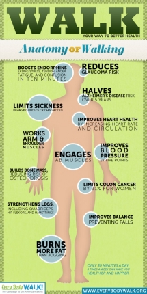 Anatomy of Walking - Fitness and Exercise