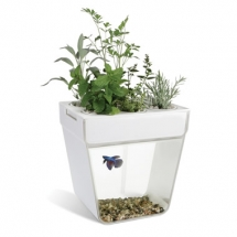 Aquaponic Fish Tank - Christmas Gift Ideas