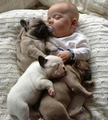 Baby Snuggle - Adorable Dog Pics