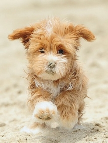 Beach doggie - Adorable Dog Pics