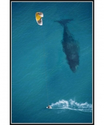 Kiteboarder passes unknowingly past whale - Kitesurfing