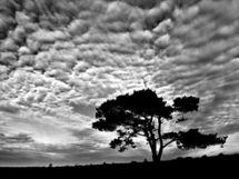 Tree and Clouds - Fantastic Photography