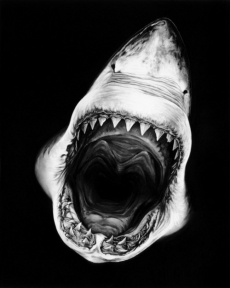 Lookin' down the gullet of a man-eater - Fantastic shots