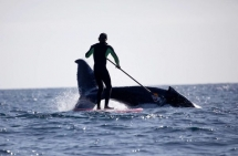 Jamie Mitchell SUP with humpback whale - SUP - Stand Up Paddleboarding