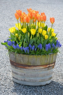 Container Gardening with Bulbs - Gardens