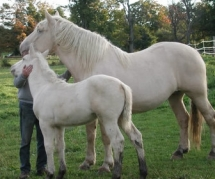 Cream Coloured Ponies - My Favourite Things