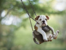 Dog on a Swing - Animals