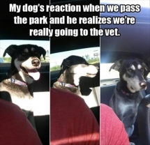 Dog Reaction Funny - Funny