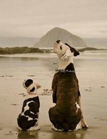 dogs on the beach - Adorable Dog Pics
