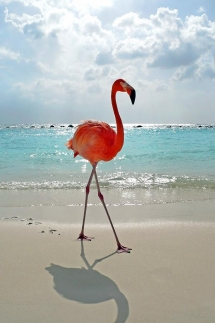 Flamingo - Beautiful Animals