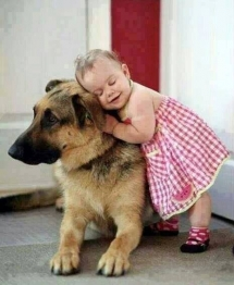 German Shepard with a little girl - Pets
