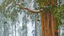 Giant Sequoias - What a wonderful world