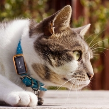 GPS Pet Tracker - Pets