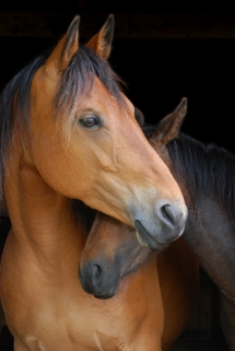 Horses - Beautiful Animals