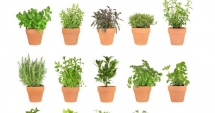 How to Build an Herb Garden - Gardens