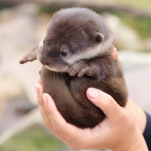 Otter Ball - Animals