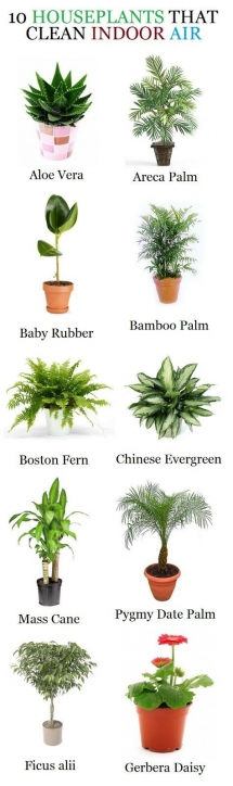 Plants that clean indoor air - Gardens