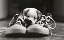 Puppy chewing on a shoe - Adorable Dog Pics