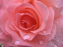 Raindrops on Roses - My Favourite Things