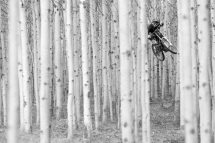 See the biker through the forest - Mountain Biking