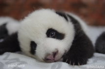 So happy that tomorrow is the weekend - Panda