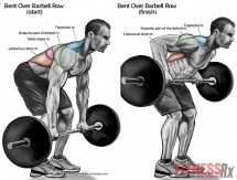 Top 8 Back Workout Exercises For Mass! - Health & Fitness