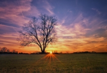 Tree at Sunset by Lonnie Hicks - Pics I love
