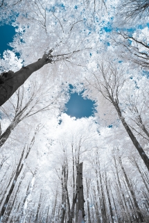 Trees glowing with snow and ice - Fantastic shots