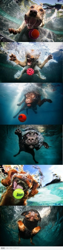 Underwater dogs are awesome! - Animals