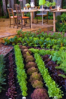 Great Vegetable Garden   Great Gardening Ideas Part 5