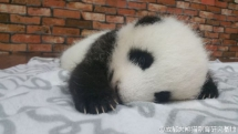 What do you dream of? Smile so sweetly. - Panda