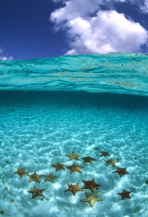 A cluster of starfish in crystal clear seawater [photo]
