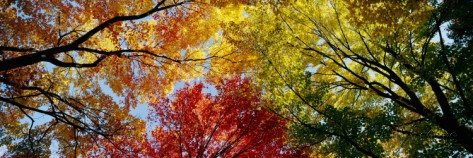 Colorful Trees in Fall, Autumn, Low Angle View Poster
