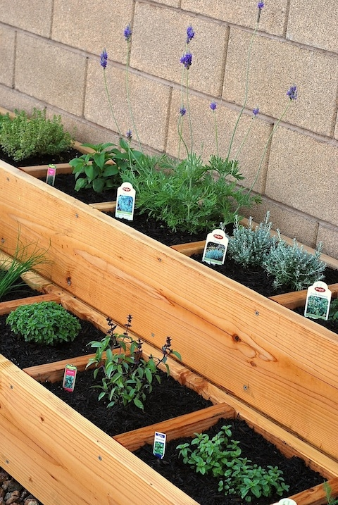 Container Herb Garden - Image 2