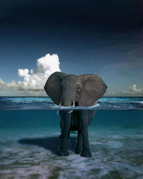 Elephant swimming in the ocean [photo]