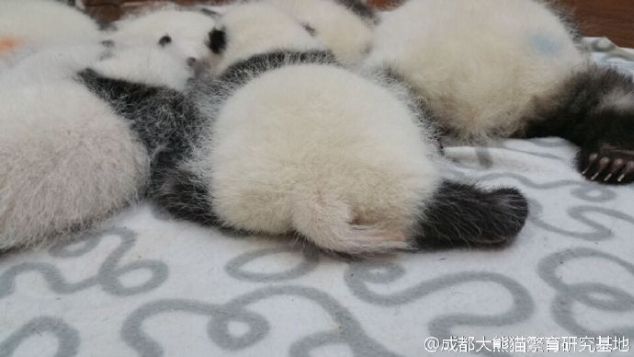 Look at these cute panda buttocks - Image 2