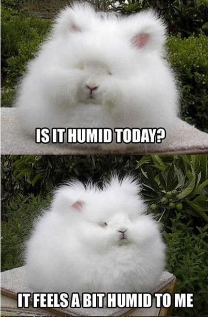 Is It Humid Today Favething Com