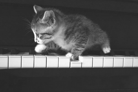 Kitten On Piano Favething Com