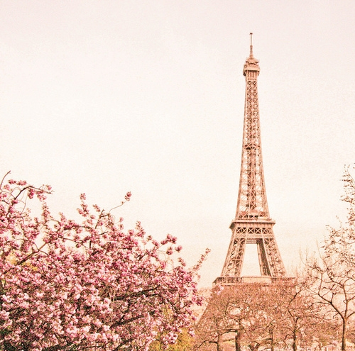 As Creation Pink Paris Pattern Eiffel Tower Childrens: FaveThing.com