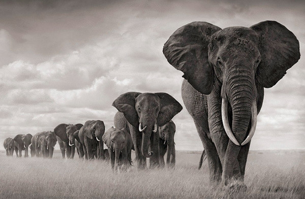 Image result for majestic african elephant