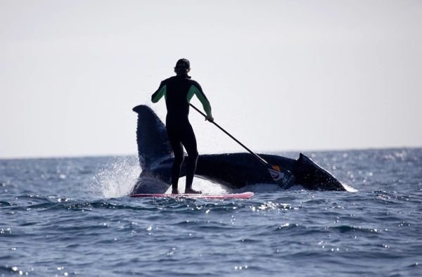 Jamie Mitchell SUP with humpback whale