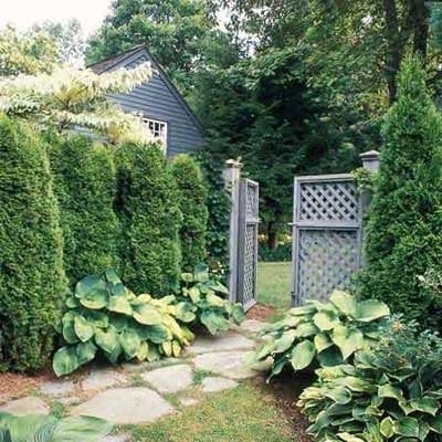 Natural privacy screen ideas for Backyard privacy landscaping trees