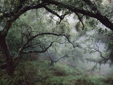 Oak Tree Forest after Storm by Douglas Steakley