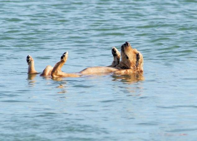 Taking A Swim Favething Com