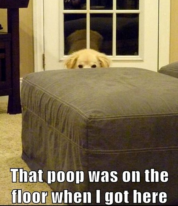 That poop was on the floor when I got here