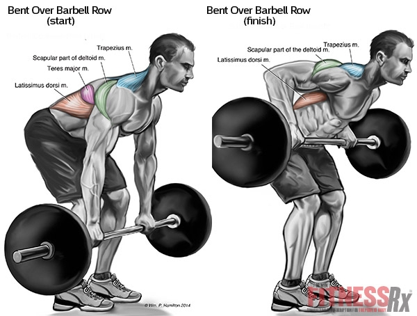 Top 8 Back Workout Exercises For Mass Favething Com