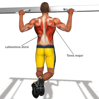 Top 8 Back Workout Exercises For Mass! - Image 3