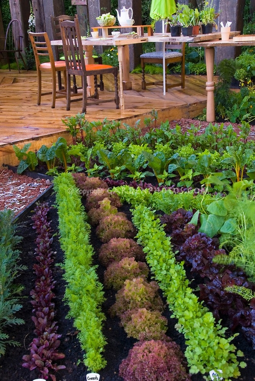 Vegetable garden for Edible garden designs